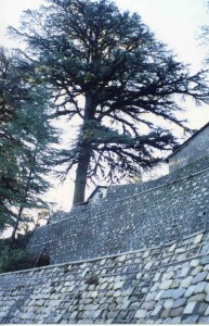 Retaining wall with tree
